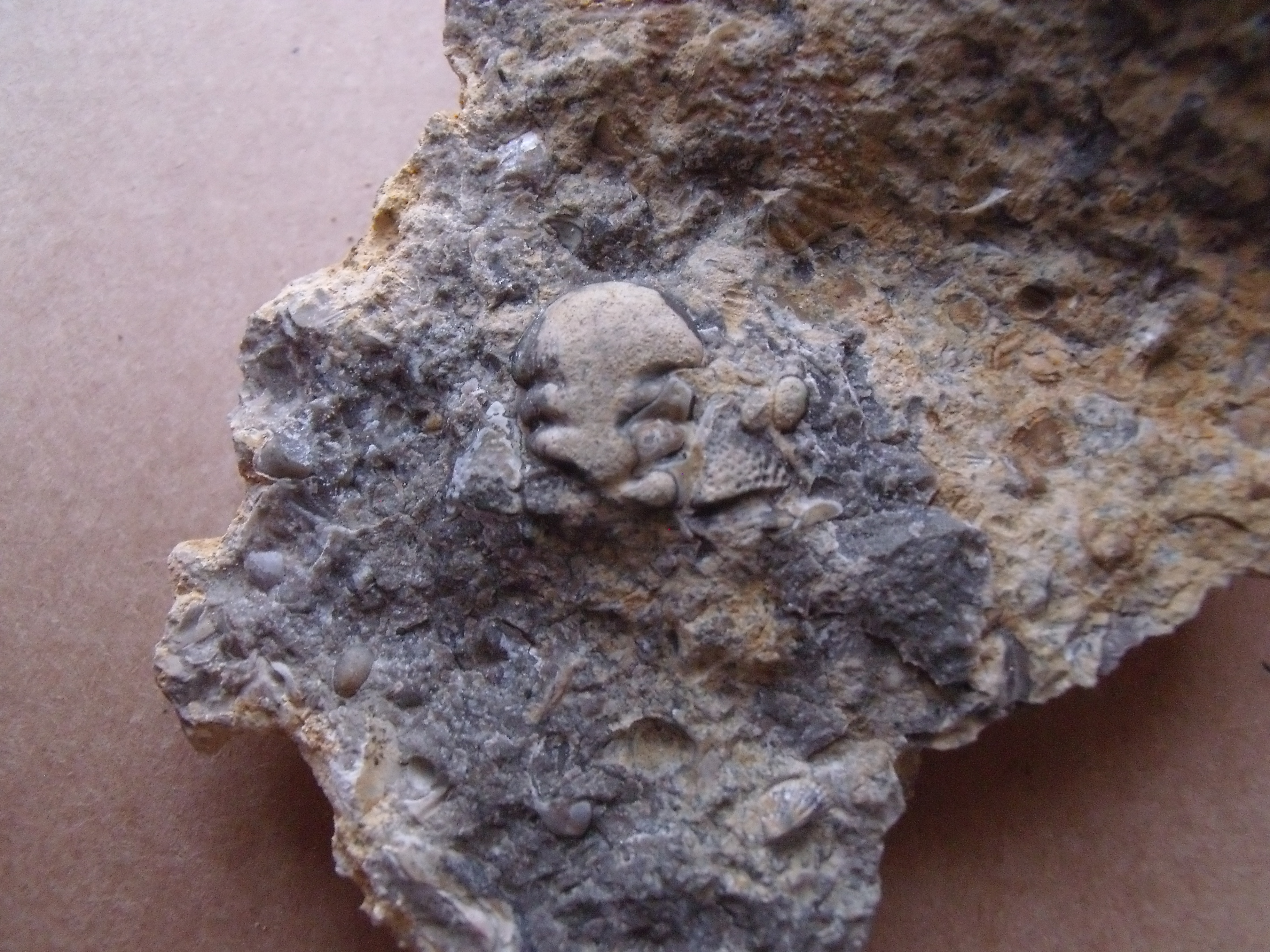 13) hlava trilobita