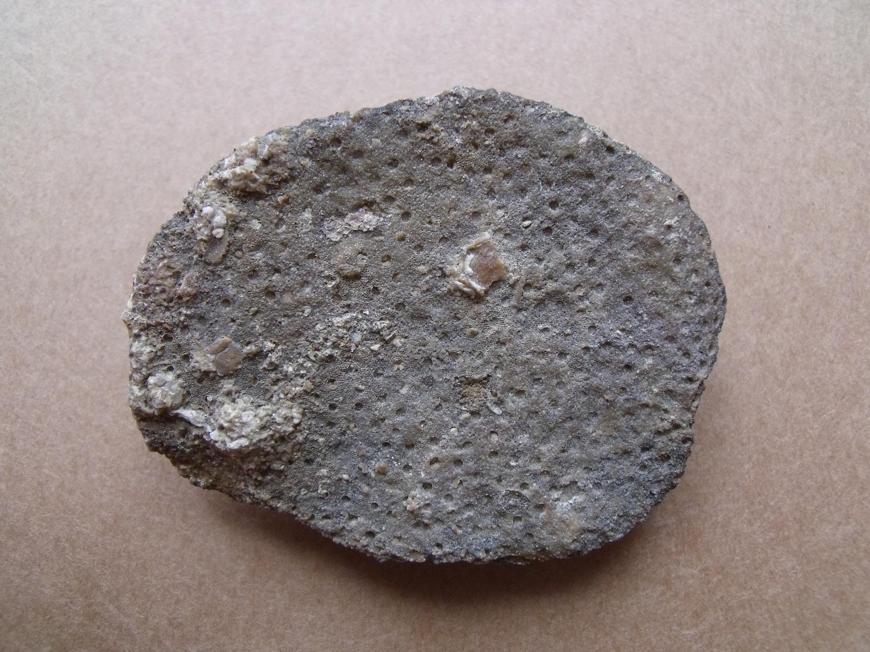korál Heliolites decipiens, (lok.lomy Amerika)